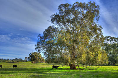 Rural Australia Art Print by Imagevixen Photography