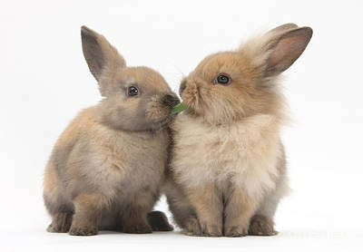 Photograph - Sandy Rabbits Sharing Grass by Mark Taylor