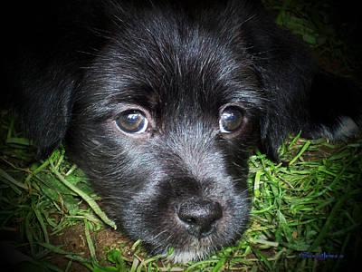Cute Dog Digital Art - Sasha by Robert Orinski