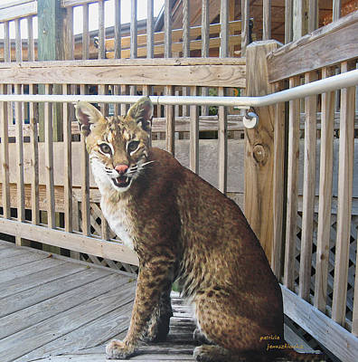 Photograph - Save The Florida Panther by Patricia Januszkiewicz