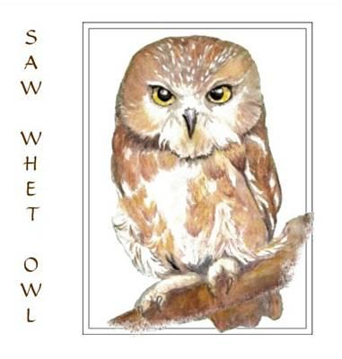 Birding Painting - Saw Whet Owl by Carole Barkett