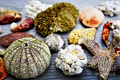 Specimen Photograph - Sea Treasures by Elena Elisseeva