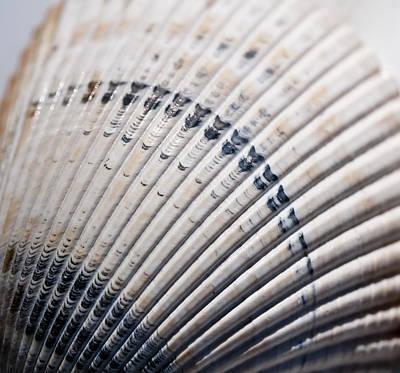 Photograph - Seashells  by Wilma  Birdwell