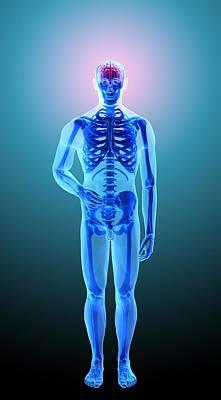 X-ray Image Digital Art - Skeleton, Artwork by Andrzej Wojcicki