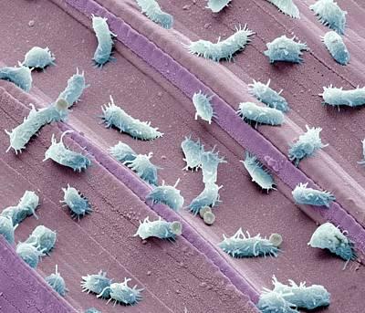 Stagnant Water Bacteria, Sem Art Print