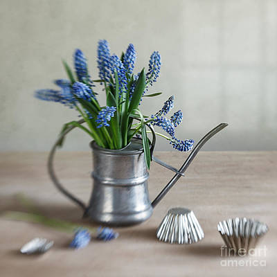 Watering Can Photograph - Still Life With Grape Hyacinths by Nailia Schwarz