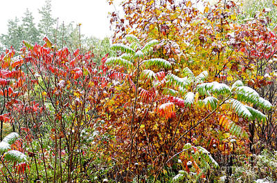 Sumac And Snow Along The Highland Scenic Highway Art Print by Thomas R Fletcher
