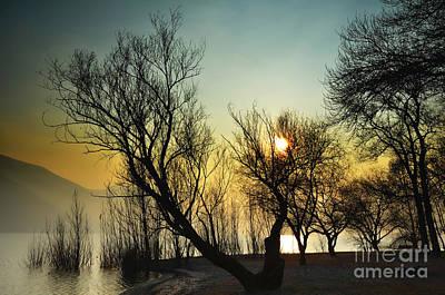 Sunlight Between The Trees Art Print