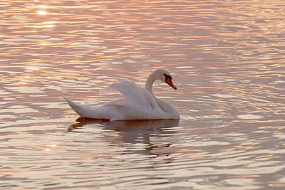 Swan In The Lake Art Print by Odon Czintos