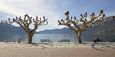 sycamore trees in Ascona - Ticino Art Print by Joana Kruse