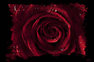Photograph - Tattered Rose by Jeff Adkins