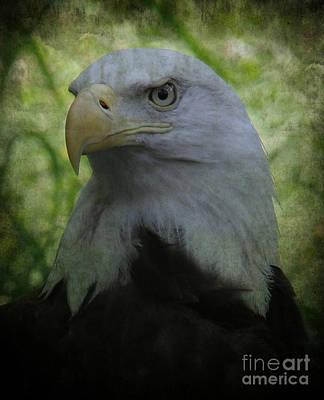 Photograph - The American Bald Eagle - Lee Dos Santos by Lee Dos Santos