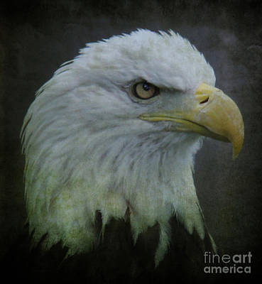 Photograph - The American Bald Eagle II by Lee Dos Santos