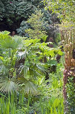 Heligan Photograph - The Lost Gardens Of Heligan, Uk by Dr Keith Wheeler