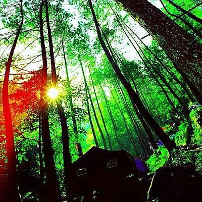 Forest Wall Art - Photograph - #travel #travelingram #mytravelgram by Tommy Tjahjono