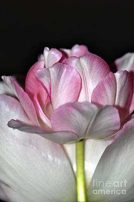 Art Print featuring the photograph Tulipe by Sylvie Leandre