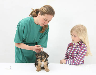Vet Giving Pup Its Primary Vaccination Art Print by Mark Taylor