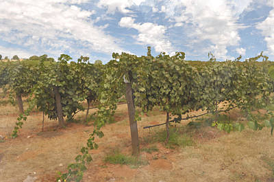 Grapevines Digital Art - Vineyard Blue Sky by Brandon Bourdages