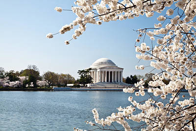 Washington Dc Jefferson Memorial With Cherry Blossoms Original