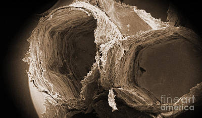 Wasp Nest Photograph - Wasp Nest Cells, Sem by Science Source