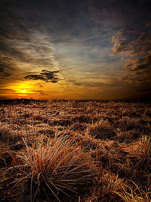 Weeds Art Print by Phil Koch