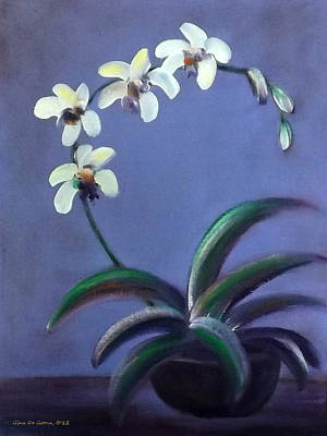 Gina Gray Painting - White Orchids by Gina De Gorna