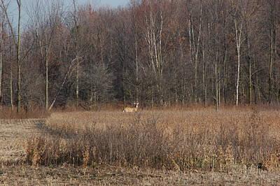 Photograph - Whitetail Deer by Randy J Heath