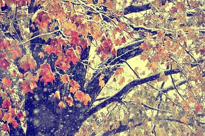 Photograph - Winter In Autumn by JAMART Photography