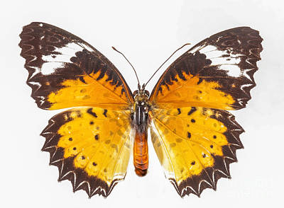 Fluttering Photograph - Yellow Butterfly by Anek Suwannaphoom