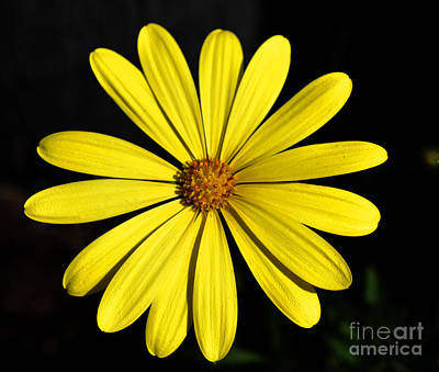 Photograph - Yellow Floral by Clayton Bruster