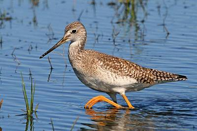 Photograph - Yellowlegs by Ira Runyan