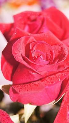 Rose Art Print by Gornganogphatchara Kalapun