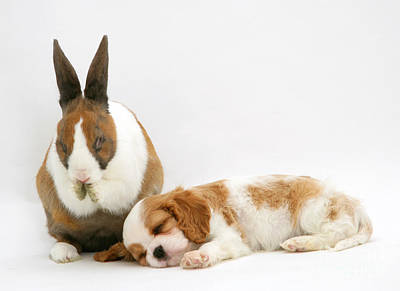 Rabbit And Puppy Art Print by Jane Burton