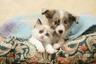 Photograph - Kitten And Pup by Jane Burton