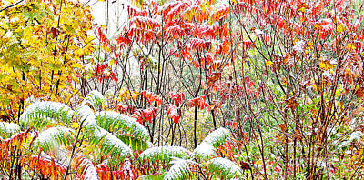 Rhus Photograph - Autumn Snow Monongahela National Forest by Thomas R Fletcher