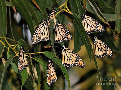 Butterflies Art Print by Marc Bittan