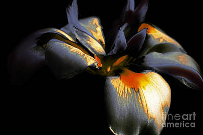 Photograph - Abstract Iris by Karen Lewis