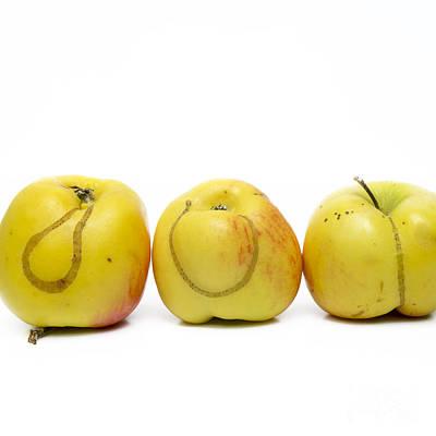 Hymenopteran Insect Photograph - Apples by Bernard Jaubert