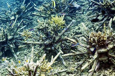 Ceramic Fish Photograph - Artificial Reef by Georgette Douwma