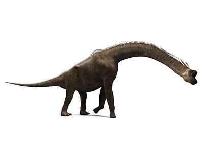 Brachiosaurus Photograph - Brachiosaurus Dinosaur, Artwork by Sciepro