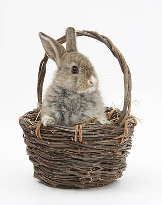 House Pet Photograph - Bunny In A Basket by Mark Taylor