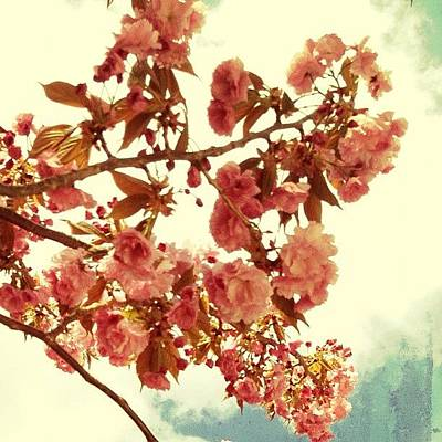 Spring Wall Art - Photograph - Cherry Blossoms by Natasha Marco