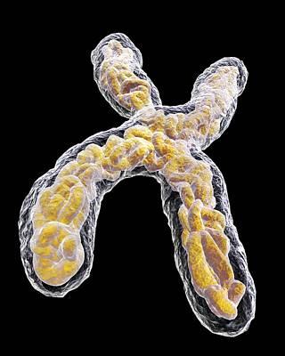 Heredity Photograph - Chromosome, Artwork by Pasieka