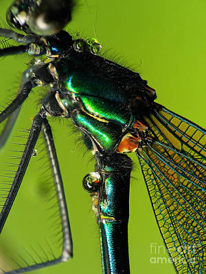 Dragonfly In Drops Art Print