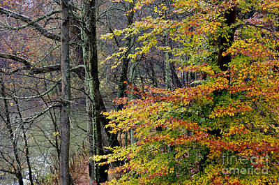 Fall Along West Fork River Art Print by Thomas R Fletcher