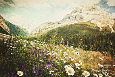 Customized Photograph - Field Of Daisies And Wild Flowers by Sandra Cunningham