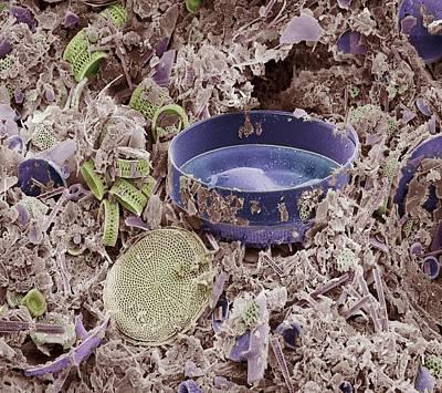 Fossilised Diatoms, Sem Art Print
