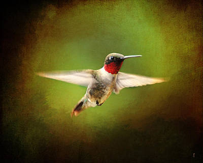 Hummingbird In Flight Print by Jai Johnson