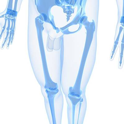 Leg Bones, Artwork Art Print by Sciepro
