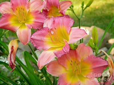 Photograph - 3 Lillies by Afroditi Katsikis